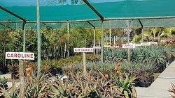 The Aloe Farm