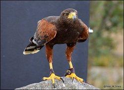The Cornish Birds of Prey Centre