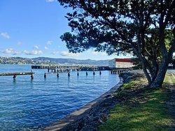Shelly Bay