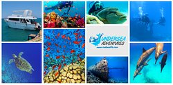 Undersea Adventures diving center