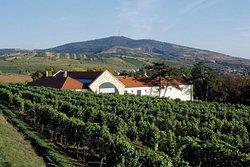 Wine estate in Tokaj wine region