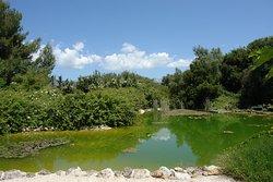 Βοτανικός Κήπος Κεφαλονίας