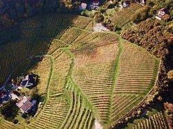 Vinogradi Horvat - Vineyards Horvat