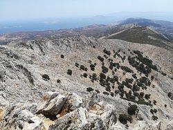 Mount Zeus Hike