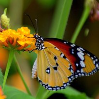 Alaris Schmetterlingpark