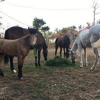 Panca Horse Uluwatu