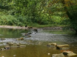 Stepping stones at Alyn Waters Country Park