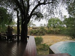 Patio and Pool with water hole opposite, with visiting elephants