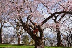 Eboshiyama Park