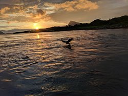 Sea Eagle Safari