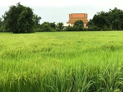 Battambang tours by bun