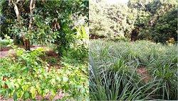 Shabuta Spice Farm