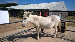 Tamar Valley Donkey Park