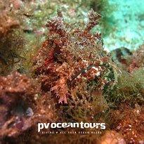 PV Ocean Tours