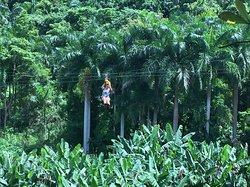 Yunque Ziplining