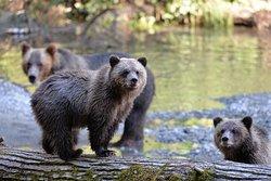 Homalco Wildlife & Cultural Tours