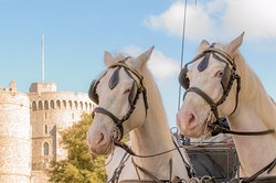 Windsor Town Horse Drawn Carriages