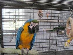 Parrot Island - Exotic Bird Sanctuary