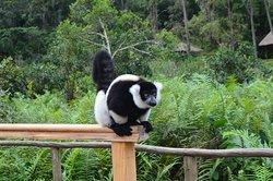 greeter at trail head of lemur island