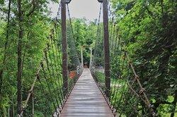 Khao Kradong Forest Park