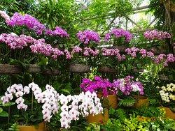 Tropical Dream Center