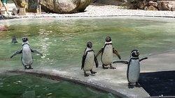 Saarbrucker Zoo