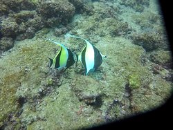 Amazing dives with Gustavo!
