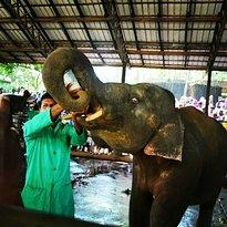 Tony Sri Lanka Tours
