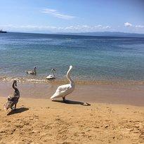 Παραλία Αγία Παρασκευή