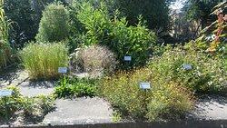 Le Jardin Monastique de Plantes Medicinal d'Eschau