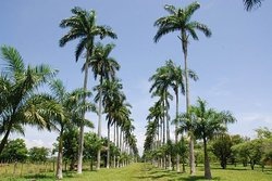 Botanischer Garten von Cienfuegos