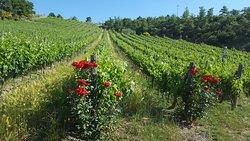 La Casa di Bricciano - Azienda Agricola Biologica - Organic winery