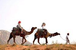 Dharma Camel Safari pushkar