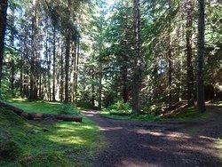 Farigaig Forest