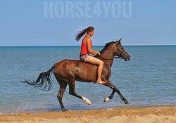 Riding Club Horse4you