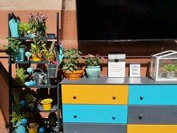 outdoor garden display