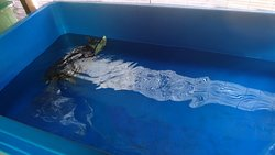 Sea turtle trapped in a small plastic container
