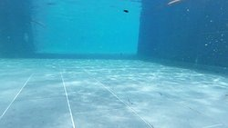 Soot particles in the pool (Black spots that stained swim wear)