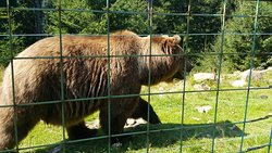 Rehabilitation Center of the Brown Bear