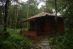 Red Cedar cottage