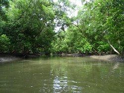 Klong Kone Mangrove Forest