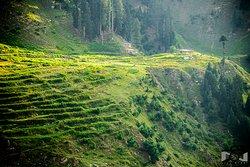 Terracing on Lalazar