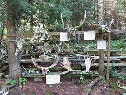 Naturalist area