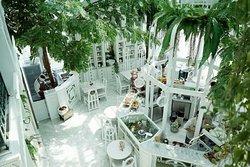 Organika House