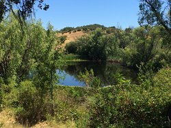 Healdsburg Ridge Open Space Preserve