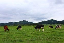 Watanabe Experience Farm