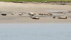 zeehondjes spotten met de Festijn