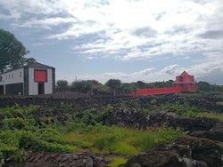 Pico Wine Museum