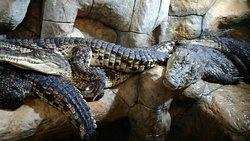 Yalta Krokodillyarium