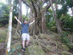 Cay Da Dai Thu (800 Year Ficus)